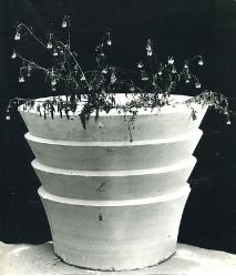 1982. Цветочница Ступенчатая / Pakāpjveidīgs puķupods